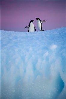 Pingouins Photo 19