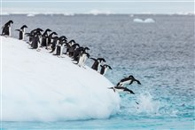 Pingouins Photo 9