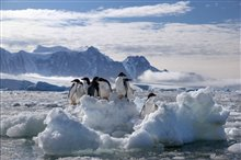 Pingouins Photo 11