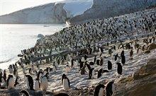 Pingouins Photo 13