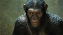 Rise of the Planet of the Apes Photo 3