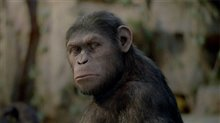 Rise of the Planet of the Apes Photo 13