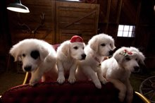 Santa Paws 2: The Santa Pups photo 5 of 8