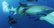 Sharkwater Extinction - Le film Photo 2