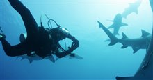 Sharkwater Extinction - Le film Photo 7