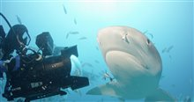 Sharkwater Extinction - Le film Photo 9