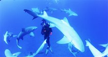 Sharkwater Extinction - Le film Photo 17