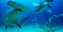 Sharkwater Extinction - Le film Photo 19