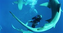 Sharkwater Extinction - Le film Photo 23