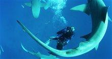 Sharkwater Extinction - Le film Photo 23
