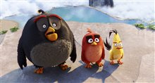 The Angry Birds Movie Photo 40