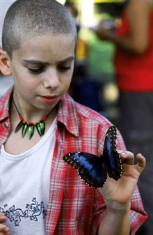 The Blue Butterfly Photo 11