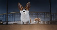 The Queen's Corgi Photo 9