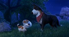 The Secret Life of Pets 2 Photo 13