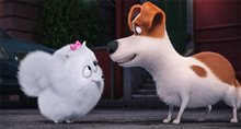 The Secret Life of Pets Photo 1