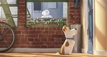 The Secret Life of Pets Photo 7