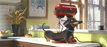 The Secret Life of Pets Photo 19