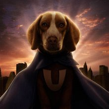 Underdog Photo 24
