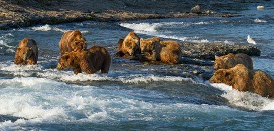 Bears Photo 4 - Large