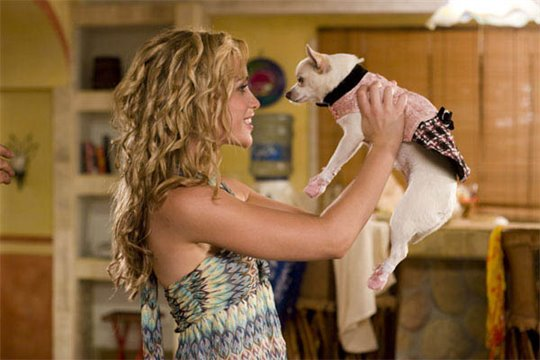Beverly Hills Chihuahua Photo 6 - Large