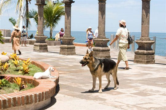 Beverly Hills Chihuahua Photo 10 - Large