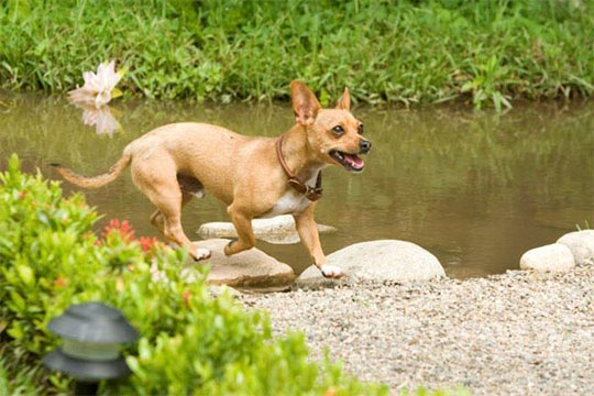 Beverly Hills Chihuahua Photo 13 - Large