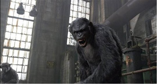 Dawn of the Planet of the Apes Photo 8 - Large