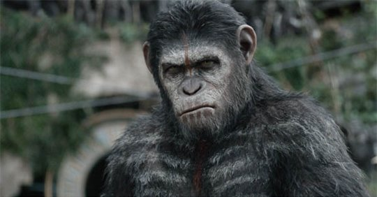 Dawn of the Planet of the Apes Poster Large