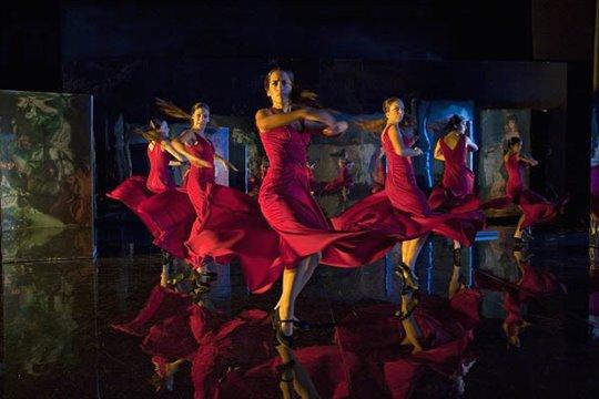 Flamenco, Flamenco Photo 11 - Large