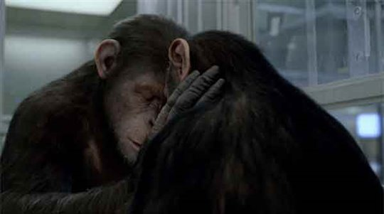 Rise of the Planet of the Apes Photo 5 - Large