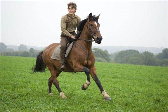 War Horse Photo 13 - Large