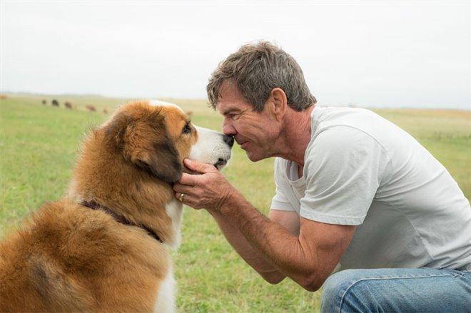 A Dog's Purpose Photo 3 - Large