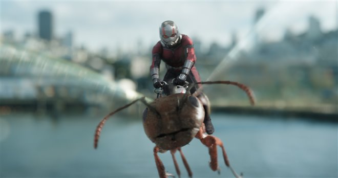 Ant-Man and The Wasp Photo 10 - Large