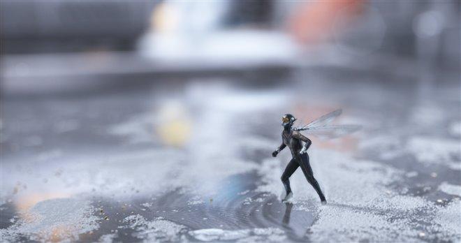 Ant-Man et la Guêpe Photo 28 - Grande