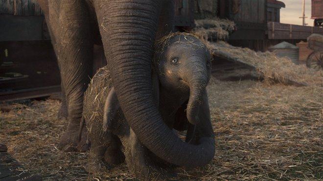 Dumbo Photo 22 - Large