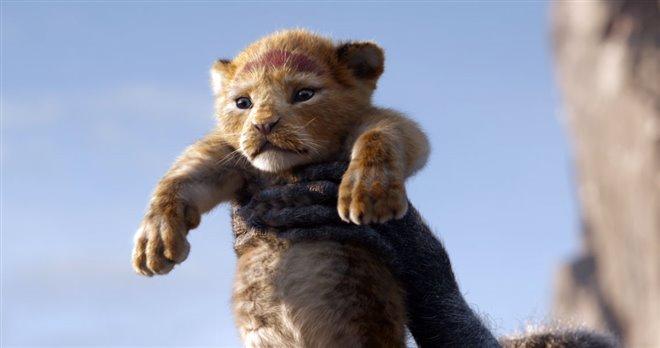 Le roi lion Photo 3 - Grande