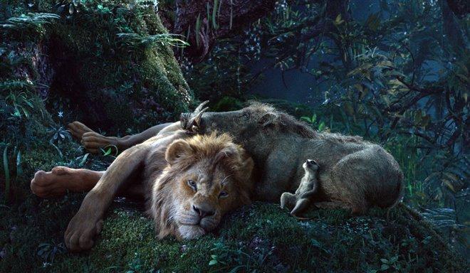 Le roi lion Photo 5 - Grande