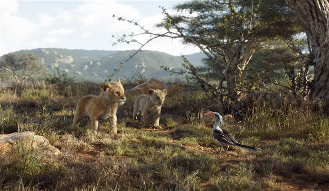 Le roi lion Photo 14 - Grande