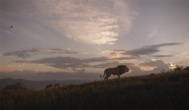 Le roi lion Photo 18 - Grande