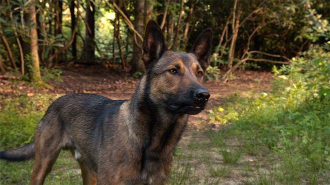 Max Photo 24 - Large