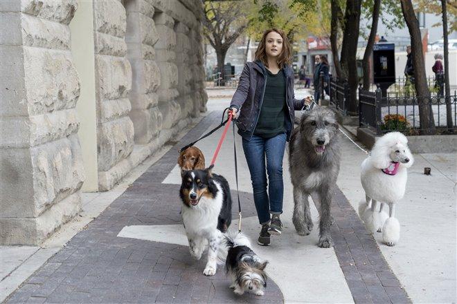 Mes voyages de chien Photo 5 - Grande