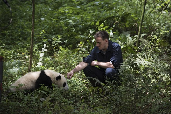Pandas Photo 3 - Large