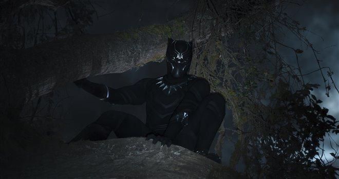 Panthère Noire Photo 24 - Grande