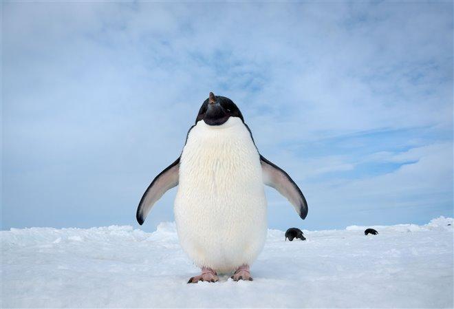 Penguins Photo 6 - Large