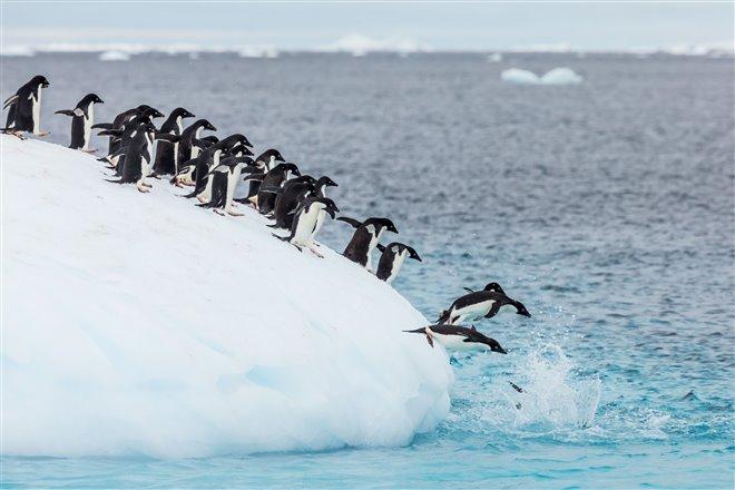 Penguins Photo 9 - Large
