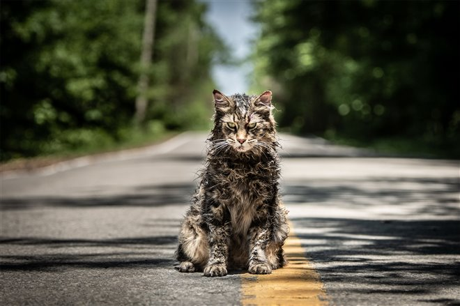 Pet Sematary Photo 7 - Large