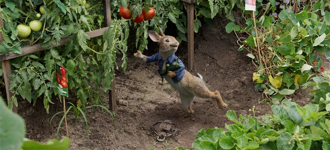 Peter Rabbit Photo 2 - Large