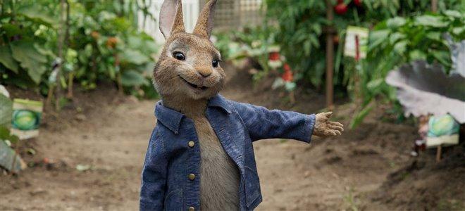 Peter Rabbit Photo 6 - Large
