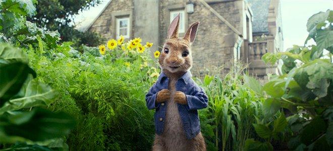 Peter Rabbit Photo 20 - Large