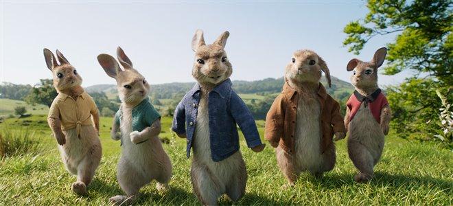 Peter Rabbit Photo 24 - Large